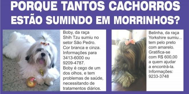 Coincidência? Descuido? Ou furto? Porque tantos cachorros somem em Morrinhos?