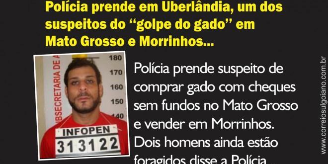 Polícia prende, em Uberlândia, primeiro suspeito de vender, em Morrinhos, gado subtraído no Mato Grosso